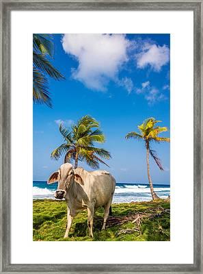 Beach Cow Framed Print by Jess Kraft