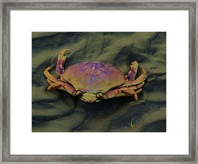 Beach Crab Framed Print by Helen Carson