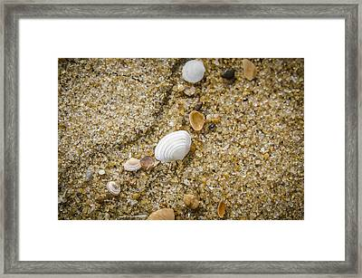 Framed Print featuring the photograph Beach Debris by Bradley Clay