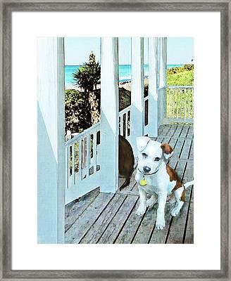 Beach Dog 1 Framed Print by Jane Schnetlage