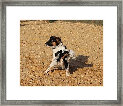 Beach Dog Pose Framed Print