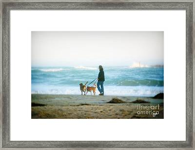 Framed Print featuring the photograph Beach Dogs by Phil Mancuso