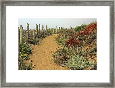 Framed Print featuring the photograph Beach Dune  by Kate Brown