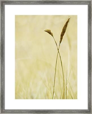 Beach Dune Wheat Grass Framed Print