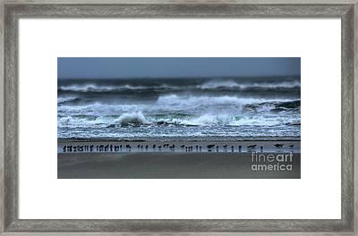 Beach Feast - Outer Banks Ocracoke Framed Print by Dan Carmichael