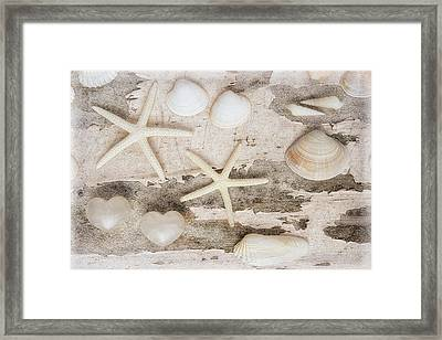 Beach Finds Iv Framed Print by Cora Niele