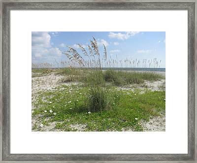 Beach Flowers And Oats 2 Framed Print