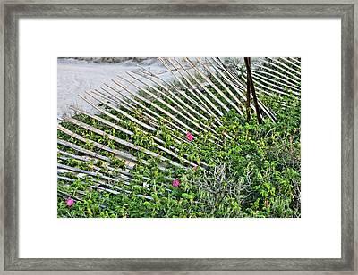Beach Flowers Framed Print by JC Findley