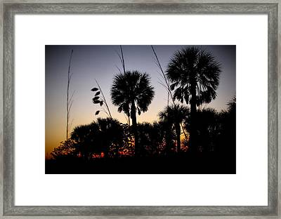 Beach Foliage At Sunset Framed Print by Phil Penne