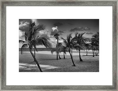 Beach Foliage Framed Print