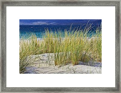 Beach Gras Framed Print