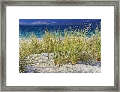 Beach Gras Framed Print