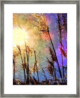 Beach Grass Afternoon Framed Print