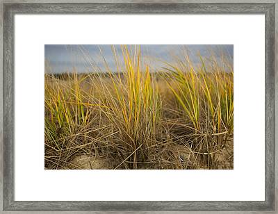 Beach Grass Framed Print by Allan Morrison