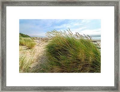 Beach Grass Framed Print by Jess Kraft
