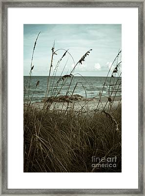 Beach Grass Oats Framed Print