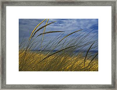 Beach Grass On A Sand Dune At Glen Arbor Michigan Framed Print