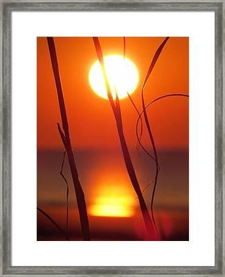 Beach Grass Sunrise Framed Print by Nikki McInnes