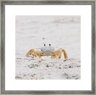 Beach Guard Framed Print