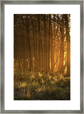 Beach Light Through The Trees Framed Print