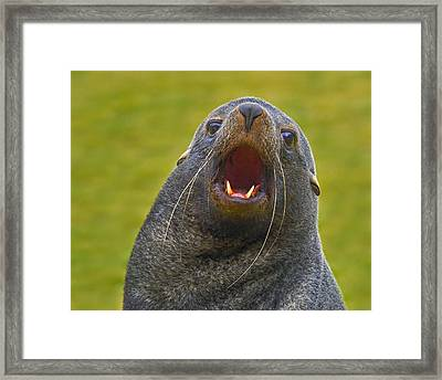 Beach Master Framed Print by Tony Beck