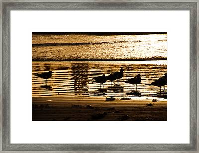 Beach Morning Framed Print