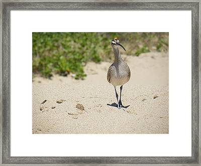 Framed Print featuring the photograph Beach Patrol by Brian Boyle