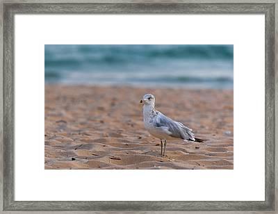 Beach Patrol Framed Print by Sebastian Musial
