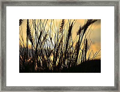 Beach Rise Framed Print by Laura Fasulo
