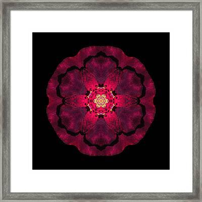 Beach Rose II Flower Mandala Framed Print