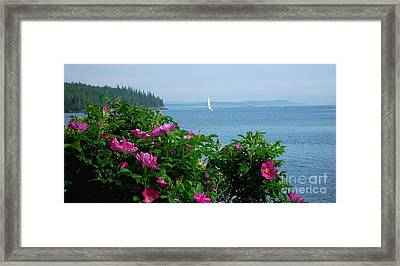Beach Roses Framed Print by Christopher Mace