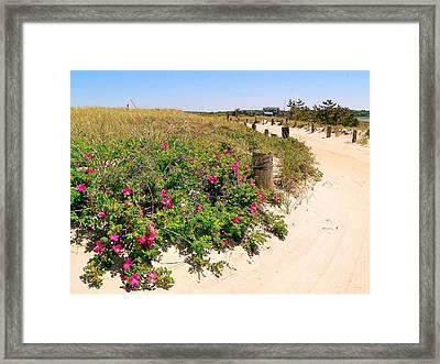 Beach Roses Framed Print by Janice Drew