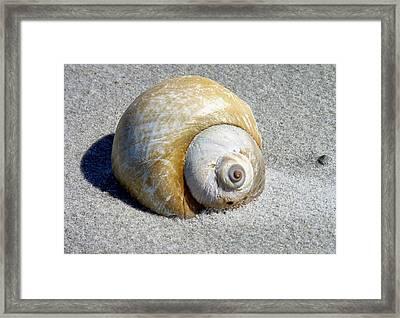 Beach Shell Framed Print by Janice Drew