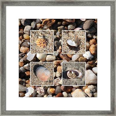 Beach Shells And Rocks Collage Framed Print