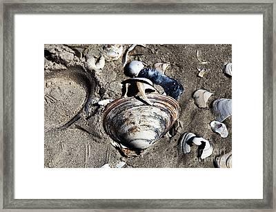 Beach Shells Framed Print by John Rizzuto