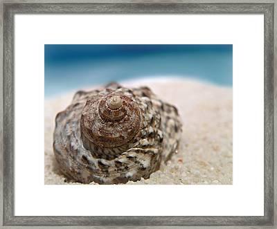 Beach Treasure Framed Print by Micki Findlay