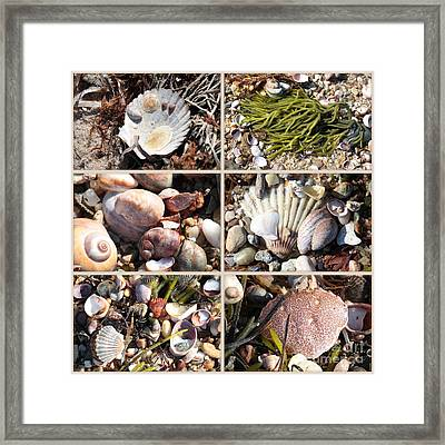 Beach Treasures Framed Print by Carol Groenen