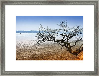 Beach Tree Framed Print by Svetlana Sewell