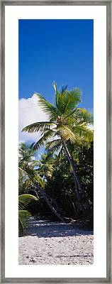 Beach Us Virgin Islands Framed Print by Panoramic Images