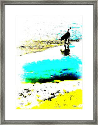 Beachcomber Framed Print by Brian D Meredith