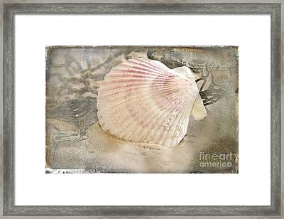 Beached Framed Print by Betty LaRue