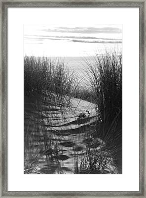 Framed Print featuring the photograph Beachgrass by Adria Trail