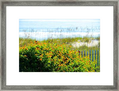 Beachy Butterflies  Framed Print
