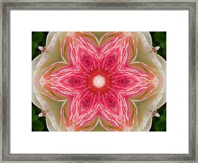 Beacon Of Light Rose Mandala Framed Print