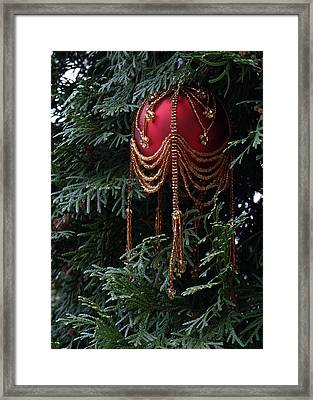 Beaded Ball In Arborvitae Framed Print