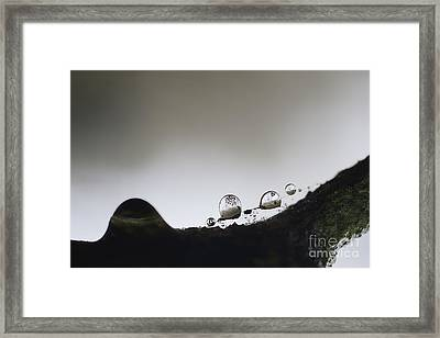 Beads Of Rain With Particles Floating Framed Print by Dan Friend