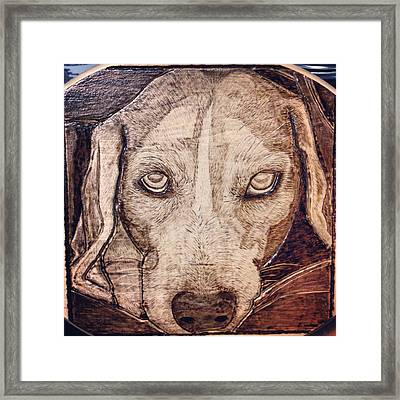 Beagle Bailey Framed Print by Lindsee Pitsch