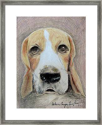 Framed Print featuring the drawing Beagle Best In Show by Patricia Januszkiewicz