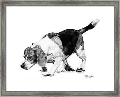 Beagle On The Hunt Framed Print by Rob Christensen