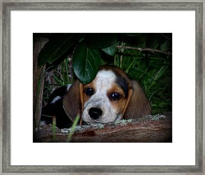 Beagle Puppy Framed Print by Lynn Griffin